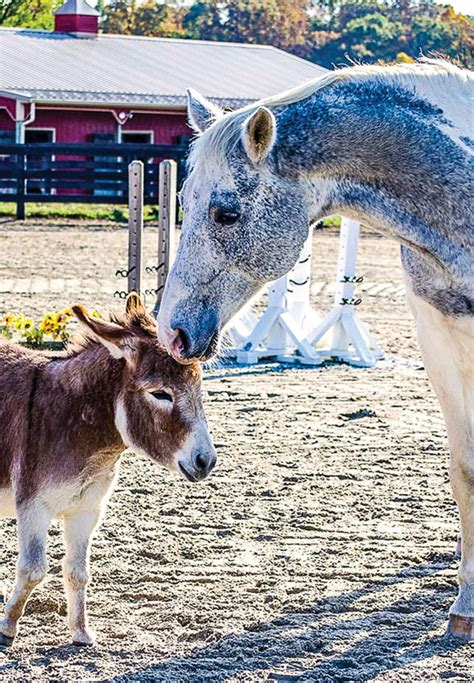 Are donkeys good companions for horses? - Expert how-to