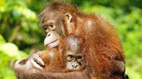 Petition · Palm oil products to be labelled with pictures