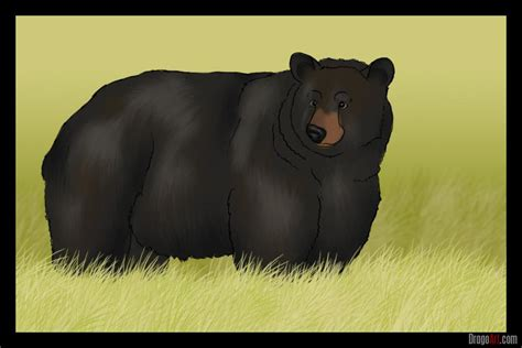 How to Draw a Bear, Step by Step, forest animals, Animals
