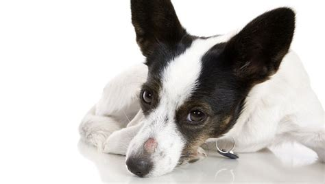 Ringworm In Dogs: Symptoms, Causes, And Treatment - Dogtime
