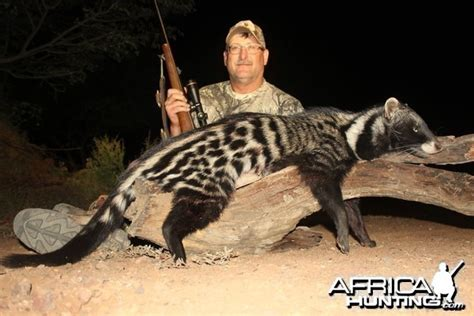 African Civet Pictures | AfricaHunting