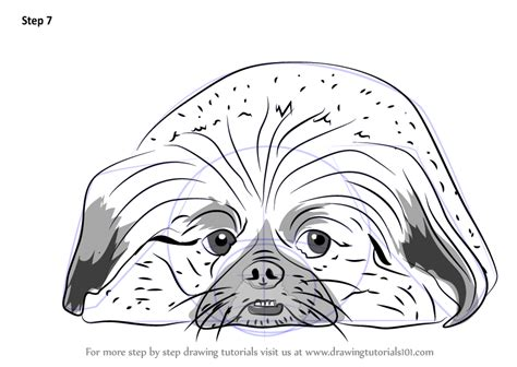 Learn How to Draw Pekingese dog (Dogs) Step by Step