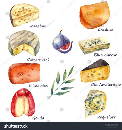 Cheese Making Various Types Cheese Set Stock Vector