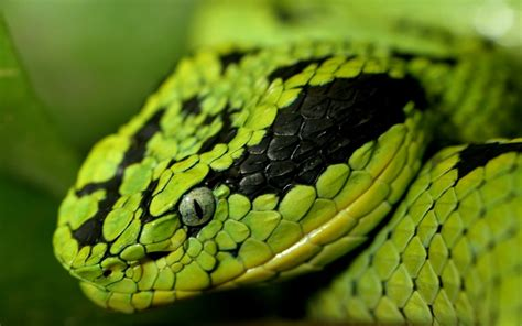 Snake Facts and Pictures For Kids | Cool2bKids